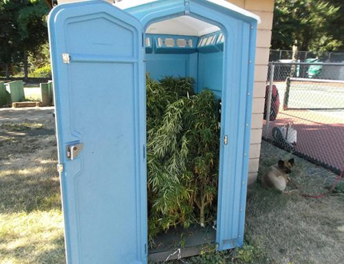 They May Not Have Known It Doesn't Flush: Police In Oregon Find Porta Potty Stuffed With Weed